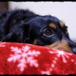 1dog_20111127015355