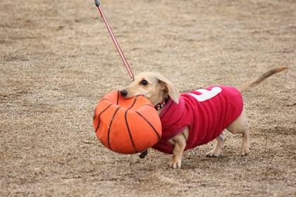 2015012dogs02
