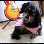 dog_20120219224543