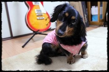 dog_20120219224543.jpg