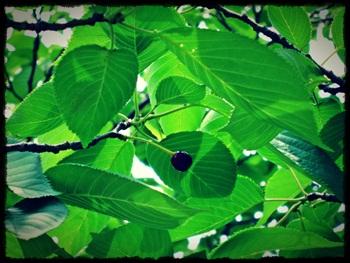 park03_20120530131018.jpg